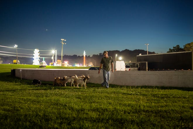 Chad Collins leads a herd of goats through the Maury County Park after a day of giving demonstrations at the Maury County Fair & Exposition in Columbia, Tenn., on Thursday, Sept. 2, 2021.