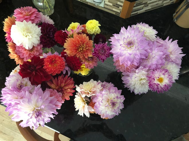 Summer is Dahlia time with lots of bouquets.