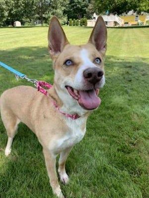 Morgan is available through WARL's adoption program.
