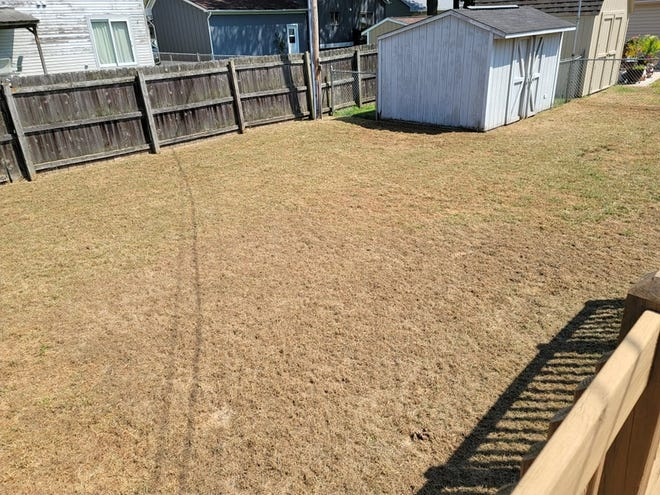 The back yard of the home of Larry and Kris Swiontoniowski of Bolles Harbor was  defoliated in late August by an infestation of armyworms.  The couple's neighbors also had their lawns ruined by the insect pests.