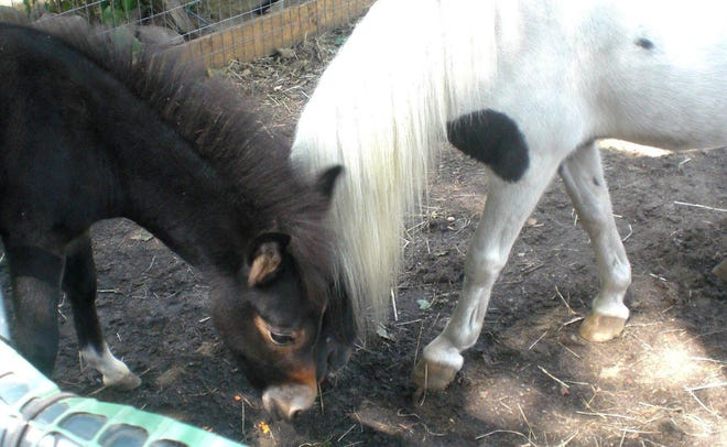 The Peace for Ponies non-profit animal rescue is hosting its annual Yard Sale on Sept. 25 and Sept. 26 from 10 a.m. to 3 p.m. with rain dates of Oct. 2 and Oct. 3, and its Open House on Oct. 24, from 11 a.m. to 3 p.m., at 12 Great Neck Road.