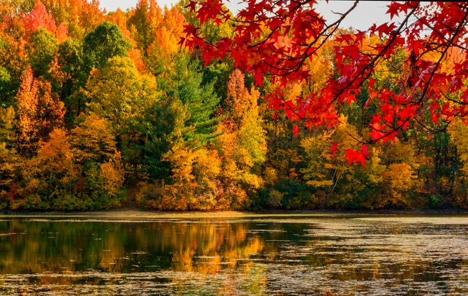 The Illinois Office of Tourism's Fall Color Report says fall foliage is expected to peak in mid-October this year in central Illinois.