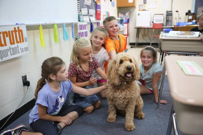 Students at Chippewa Intermediate School pet Inja, the school's therapy dog, in class on Tuesday, Sept. 7. Inja is a 5-year-old goldendoodle whose handler and owner, Krista Wenger-Lehman, works as the school's counselor.