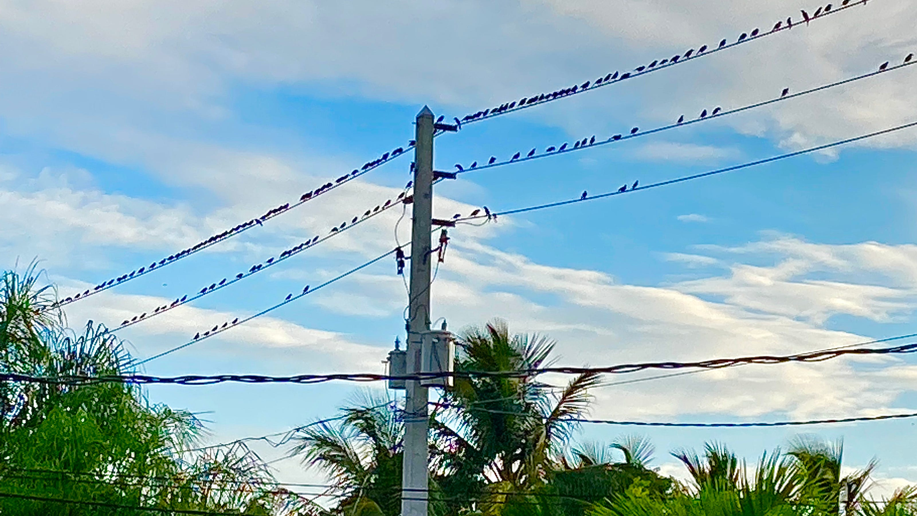 Bird migration has started with some unruly starlings crashing the sojourn south - Palm Beach Post