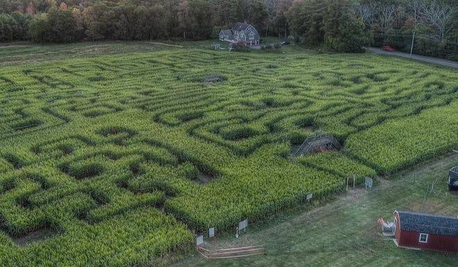 Aerial view of the Marini Farm corn maze.