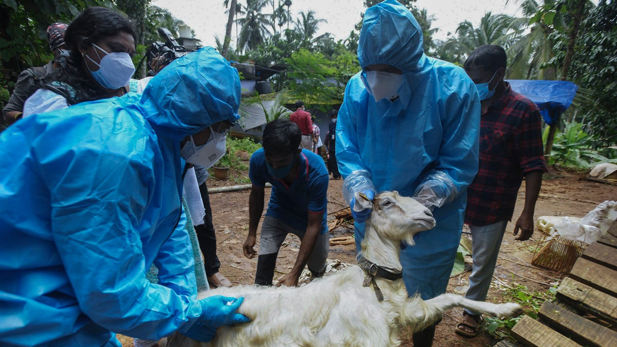 What is the Nipah virus and why is it more deadly than COVID? A virus expert explains.