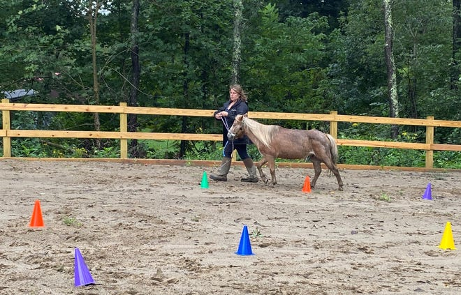Tina Swanson, owner and operator of Lantern Lighter Ranch in eastern Guernsey County, works one of her miniature horses, Kayla, in the outdoor arena at the Waymor Road property. Swanson offers several lesson packages for novice and experienced riders of all ages.