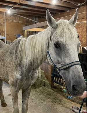 Zeus, one of six neglected horses that the Portage Animal Protective league rescued Thursday, died Tuesday. A mare is still in critical condition, but fighting, the APL says, and the other four horses are responding to treatment and care.