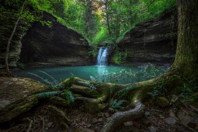 BEAUTIFUL IMAGES of the Ozarks, such as this one of Fiddlehead Falls in northwestern Arkansas, by Carr Ward will be the featured exhibit kicking off the 14th annual Ozarks Studies Symposium Sept. 23-25 at the West Plains Civic Center. (Photo courtesy of Carr Ward Photography)
