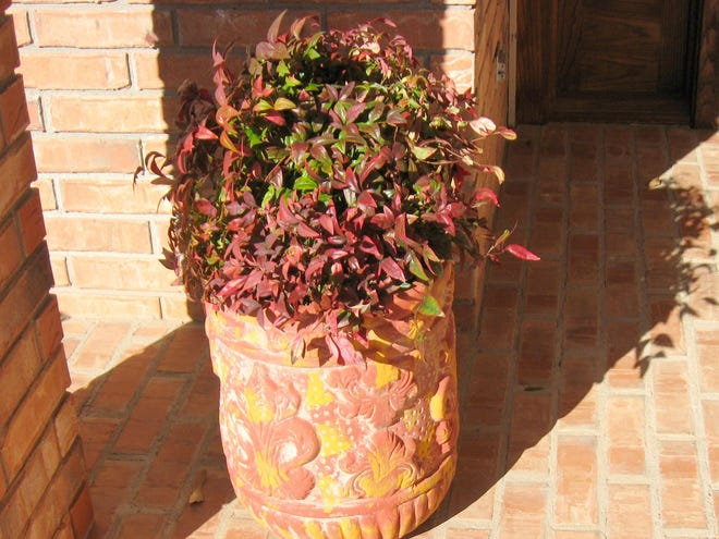 Nandina branches in decorative container
