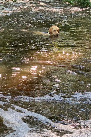 Finley swims and retrieves under a waterfall.