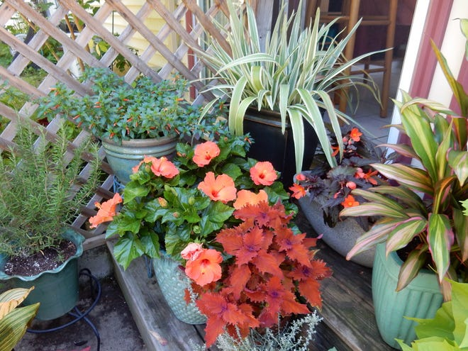 Potted plants — need to decide what to save.