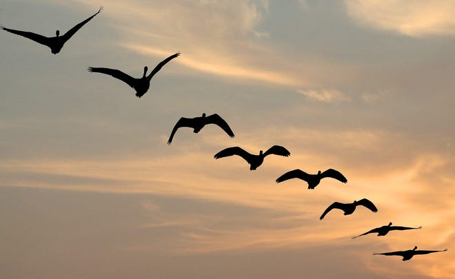 Goose hunters in central Ohio get another shot at Canadas and other less common geese beginning Oct. 23.