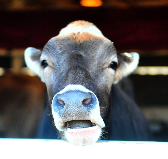 The Wayne County Fair opened on Sept. 11, 2021. Let the judging begin.