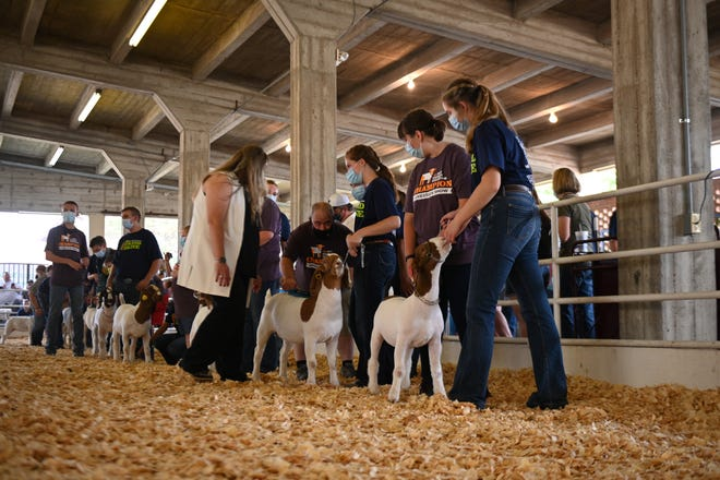 Champion Livestock Show participants line up to have their goats officially judged in the ring at the on Sept. 10 Kansas State Fair.