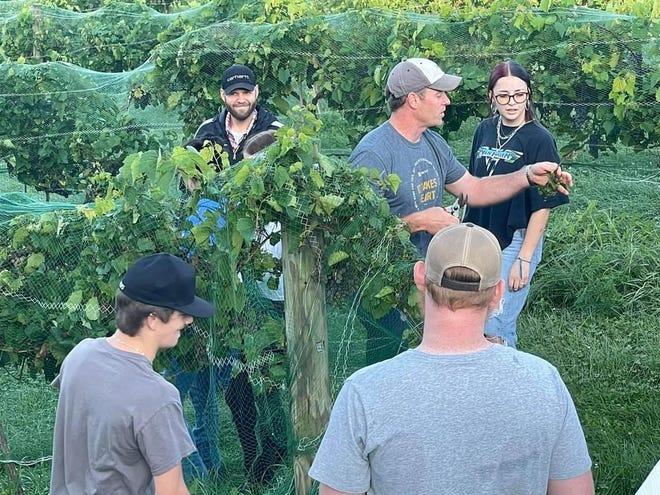 Adam Finck instructs students of New Lexington High School on grape harvesting.