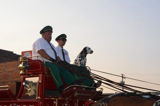 The driver's and famous Clydesdale's  Dalmatian are pictured in Canton Thursday.