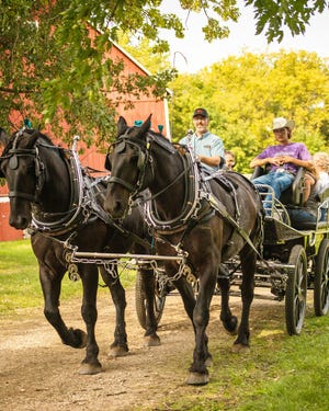 Visitors to the Horse Power Show enjoyed horse drawn carriage rides.
