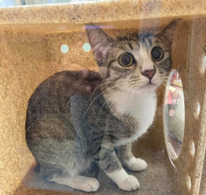 Fort Irwin Animal Control Facility focuses its services on stray animals in area tied to the High Desert base.