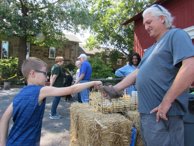 Silas Jones, 7, of Twinsburg, gingerly pets a Bantam hen owned by Mitch Verbic of Twinsburg Township at the Olde Thyme Fayre on Sept. 11.