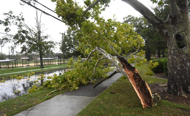 Part of a tree came down on 10 Street in Wilmington, N.C., Thursday, September 5, 2019. The effects of Hurricane Dorian were expected to impact the Wilmington area on Thursday and Friday.