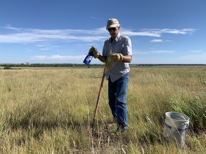Randy Rodgers holds one of the hundreds of Old World bluestem plants he has removed from his land with a shovel and bucket.