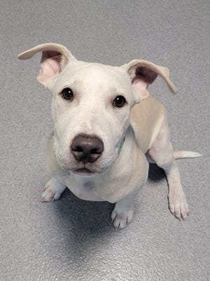Orion is the Wellington Humane Society Pet of the Week