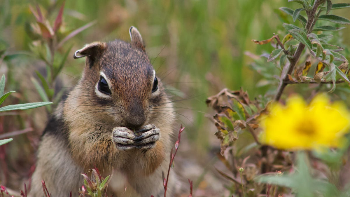 This is nuts: Squirrels have personality traits similar to humans, new research shows – USA TODAY