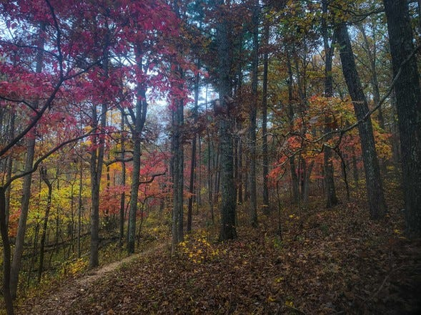Long trail hikes in autumn offer a unique way to connect with the natural world. Find a hiking opportunity at a conservation area near you to discover nature in Missouri this fall.