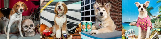 Redemption Rock Brewery is taking submissions for its annual dog calendar.