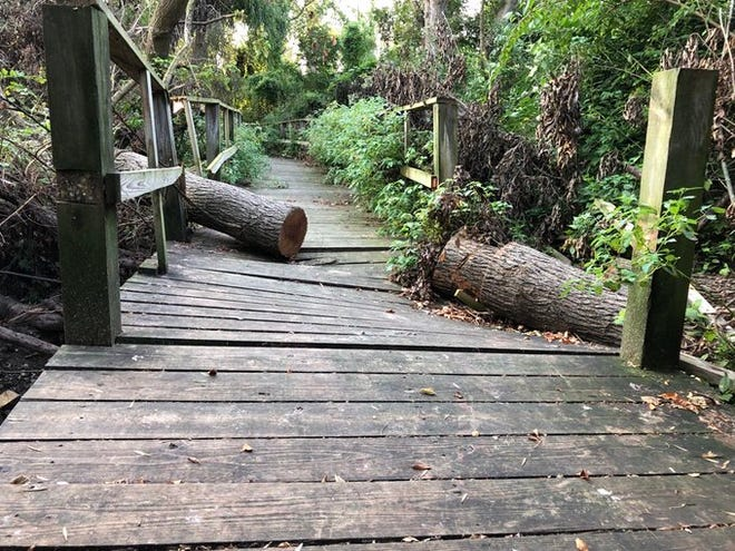 Magee Marsh Wildlife Area has reopened its entrance road and parking lots near its beach area, but its boardwalk, pictured here, will be closed until Spring 2022 due to wind damage from an Aug. 10 storm.