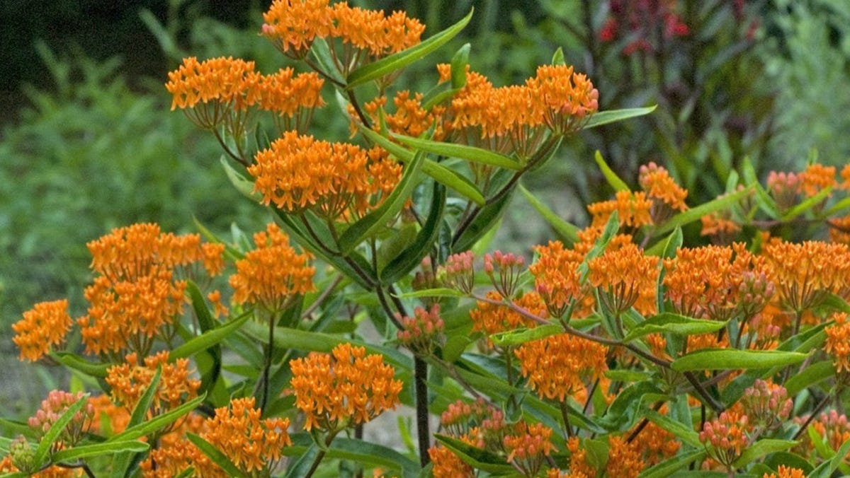 Coming Up: A variety of gardening events and activities, including classes on native plants