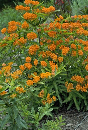 Dawes Arboretum is offering a variety of ways this week to learn about native plants.