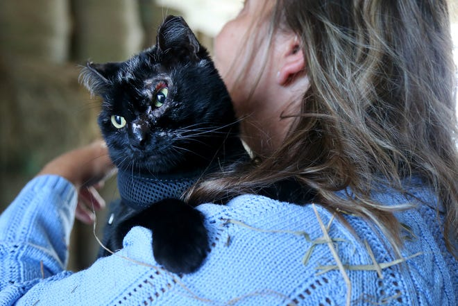 Co-owner Sue Fernholz holds Jinx, a barn cat who suffered from burn injuries caused by the fire at Scamman Farm in May.