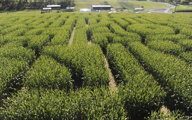 Mazezilla returns this year with an 11-acre, Medieval-themed corn maze.