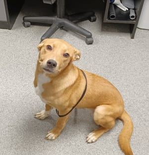Sassy is a young pup looking for a home.