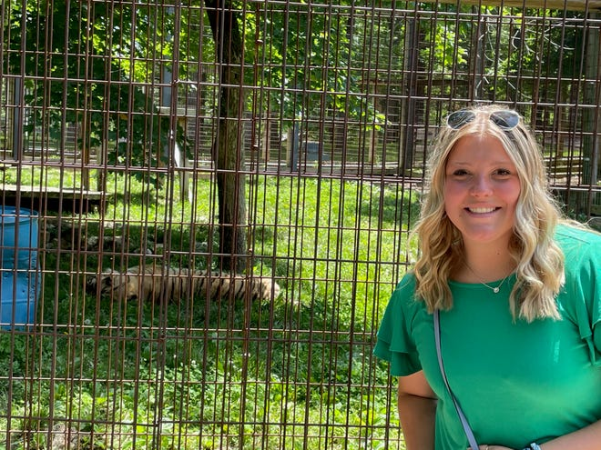 Granville graduate Addison Hoover, a junior zoology major at Miami of Ohio, stands outside the fence as Izzy takes a nap at Crown Ridge Tiger Sanctuary in Missouri. Hoover helped care for the big cats during a three-month summer internship.