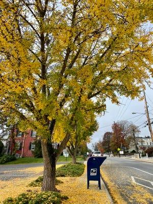 Fall in Staunton along Frederick Street in 2020.