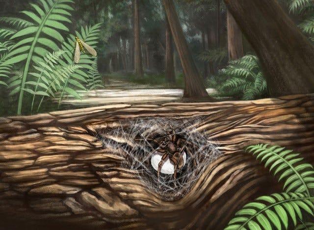 Reconstrucción ecológica de una hembra de araña lagunomegopide custodiando su huevo.