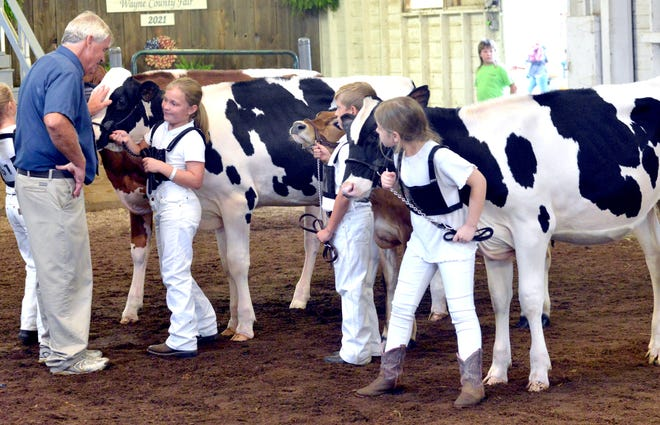 First-year dairy showmen Hannah Stoll, Robert Babulski and Laibe Morgan with the Holsteins listen to the judge during the Junior Fair dairy showmanship show Thursday. There also was an open Holstein show at the Wayne County Fair. The results for that appear in the story with this photo.
