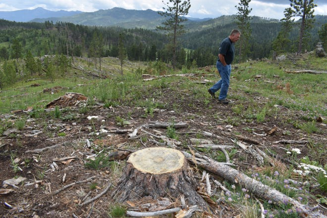 Blaine Cook, a retired U.S. Forest Service forest management scientist, is seen walking through a logging site in the Black Hills National Forest, on July 14, 2021, near Custer City, S.D.