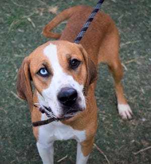 Miss Mac was among animals up for adoption this week at the Lubbock Animal Shelter and Adoption Center.