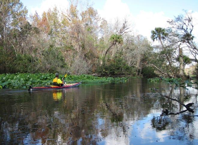 Paddler on the Wekiva River.