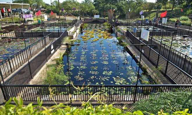 People gather at the International Waterlily Collection for the 2021 LilyFest on Saturday, Sept. 18, 2021.