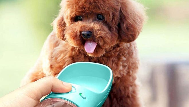 Keep your pet hydrated with this top-tier dog water bottle.