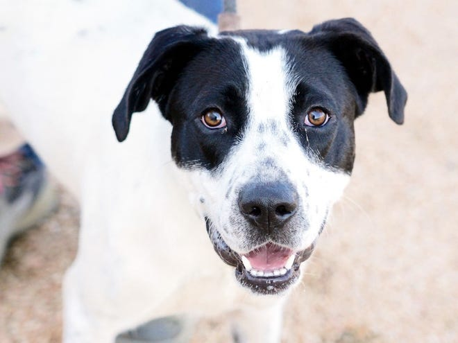 Marley entered the Williamson County Regional Animal Shelter because of the health of her person, and needs a new family to start the next chapter of her life.