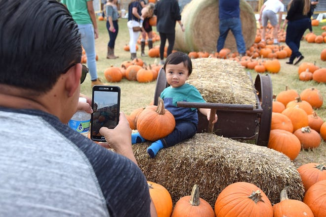 Max Saravia of Manor takes a photo of Nathan Gomez in the pumpkin patch at Barton Hill Farms in 2016.