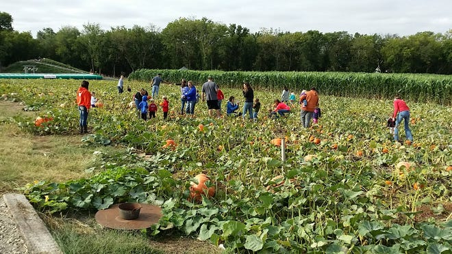 As summer turns to fall, families start thinking about a trip to a pumpkin patch. P&M Pumpkin Ranch of Moundridge  serves  McPherson and Harvey Counties.