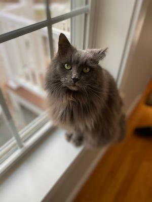 Muffy, a very happy cat.