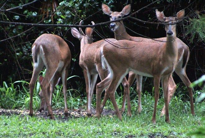 Farmington Hills wants to tackle deer overpopulation in Oakland County.